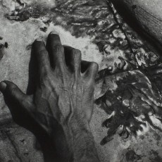 Minor White, William LaRue, Point Lobos, California, 1960, No. 4 from Sequence 15A