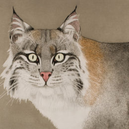 Beth Van Hoesen, Bobcat, 1984, color aquatint, etching, and drypoint with roulette, hand colored with watercolor on textured white wove paper.