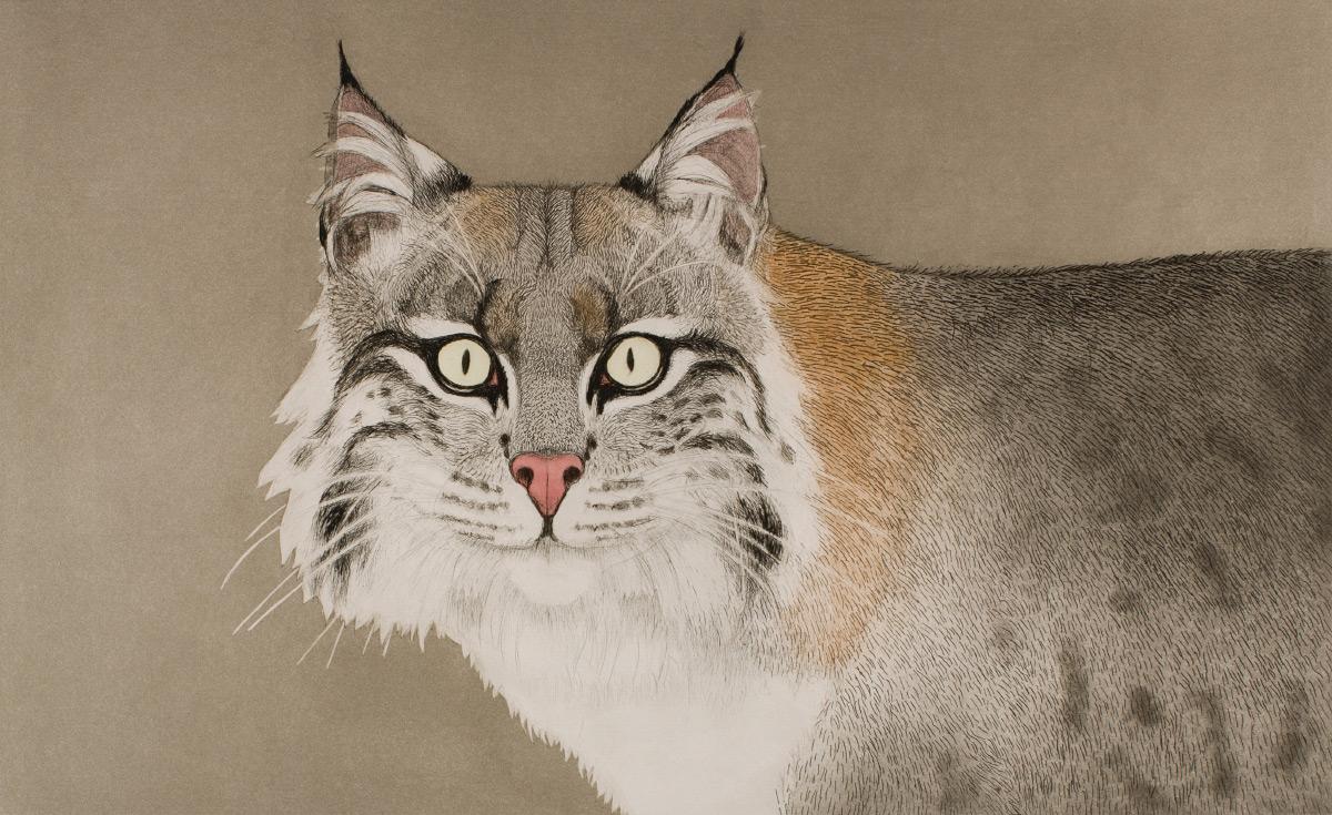 Image of: Five Kingdom Animalia Studylibnet Kingdom Animalia Portland Art Museum