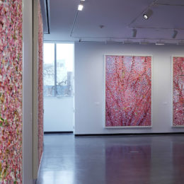Installation photo of Damien Hirst: Cherry Blossoms