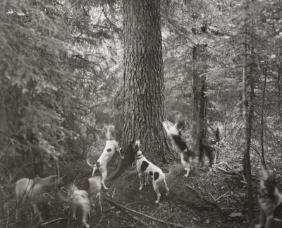 Barbara Bosworth, Hounds at Tree, Lochsa River Valley